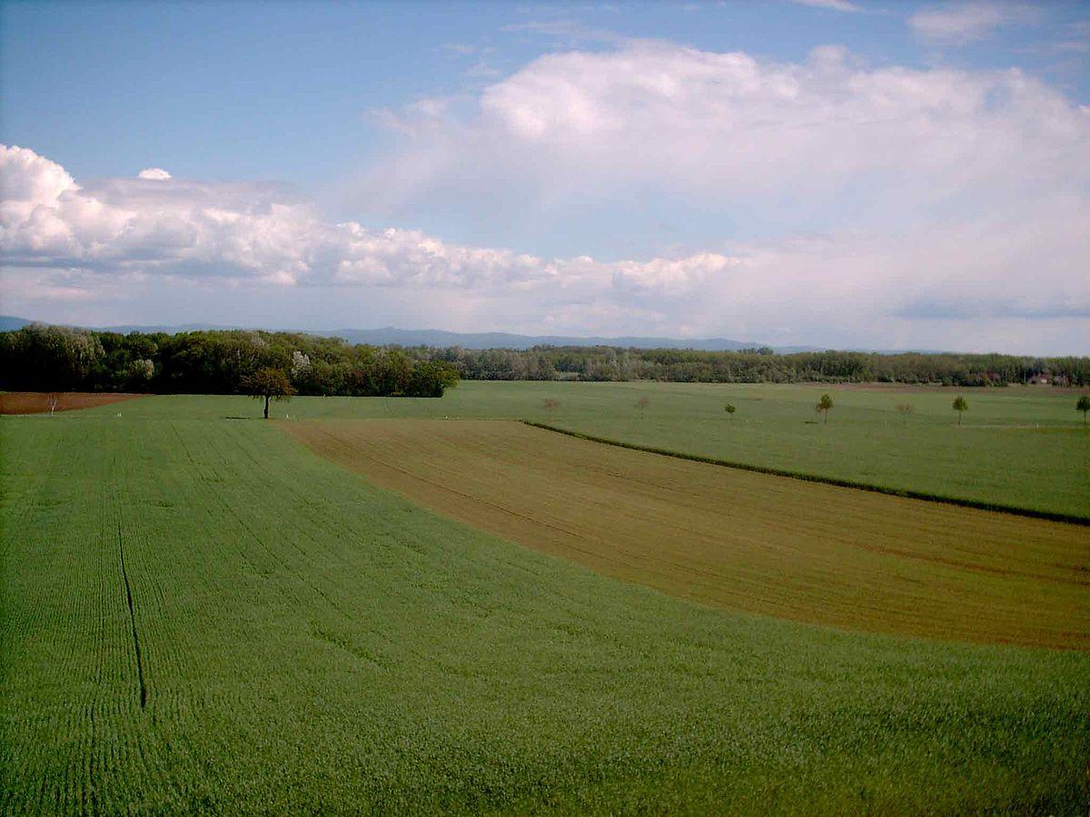 moravské pole